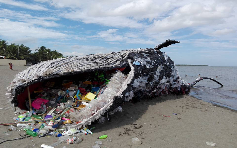 Image of a whale illustrating the plastic pollution problem.